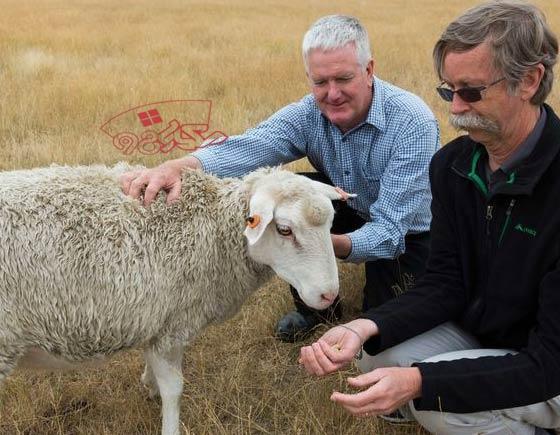 خرید گوسفند زنده بهداشتی